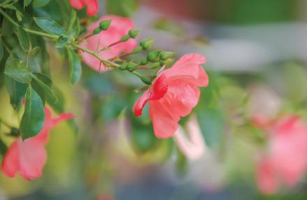in-my-garden